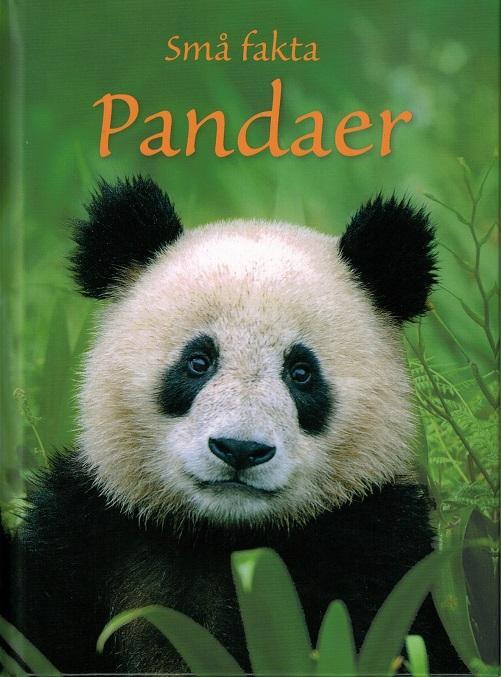 Små fakta: Små fakta: Pandaer - James Maclaine - Bøger - Flachs - 9788762722415 - 2015