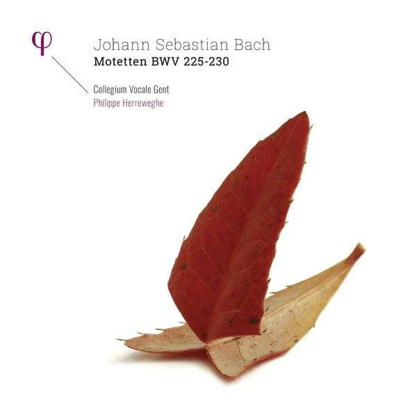 Motetten Bwv 225-230 - J.s. Bach - Musik - PHI - 5400439009509 - 9/3-2017