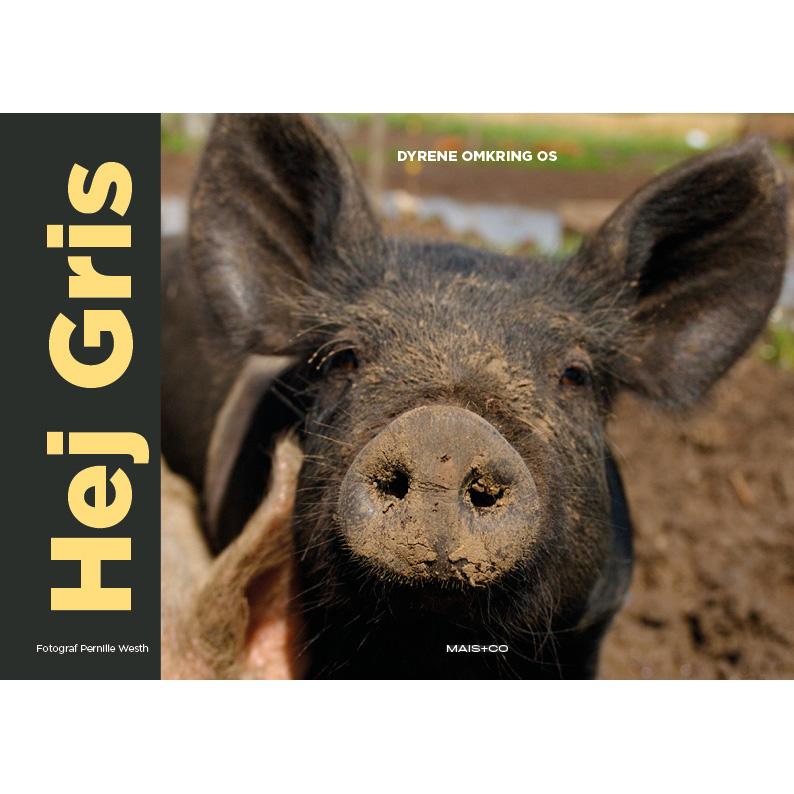 Dyrene omkring os: Hej Gris - Pernille Westh - Bøger - Mais & Co. - 9788799994731 - 1/6-2018